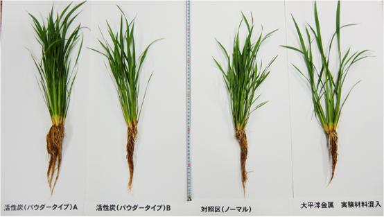 稲の比較2
