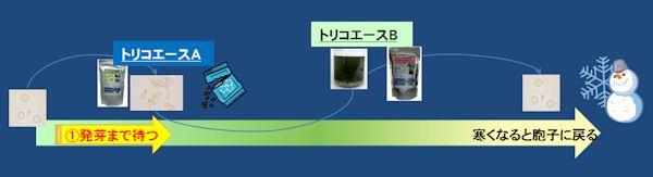トリコデルマ菌 種類 使い方